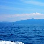 深碧の海の21世紀 長崎 壱岐のクロマグロ自主禁漁と佐渡ヶ島の大発生